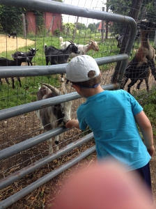 Jacob Feeding Emma-Eating Monsters (aka, Pygmy Goats)